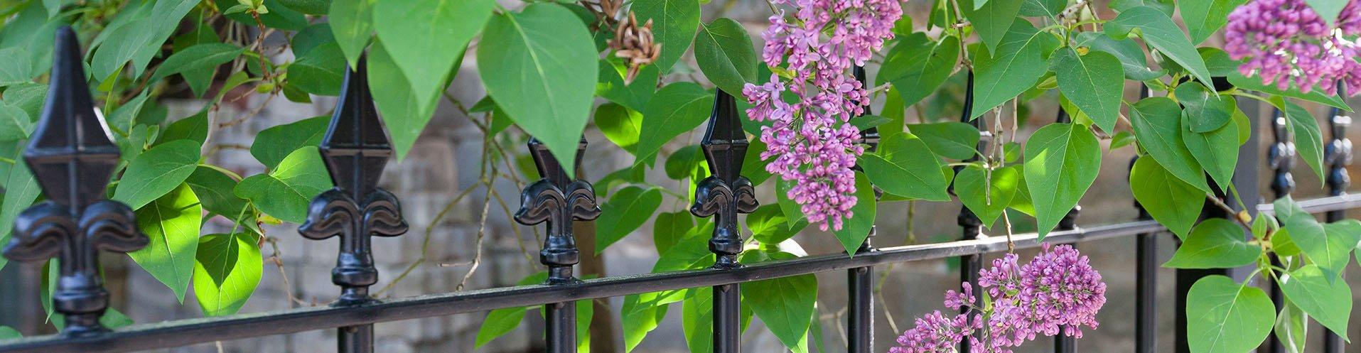 Gartenzäune aus Schmiedeeisen